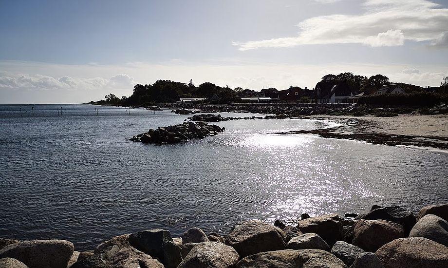 Plasticaffald og overflødige plasticprodukter er et kæmpe problem. Det er det på strandene, og det er det i havet. Her et rent miljø på Langeland. Foto: Troels Lykke