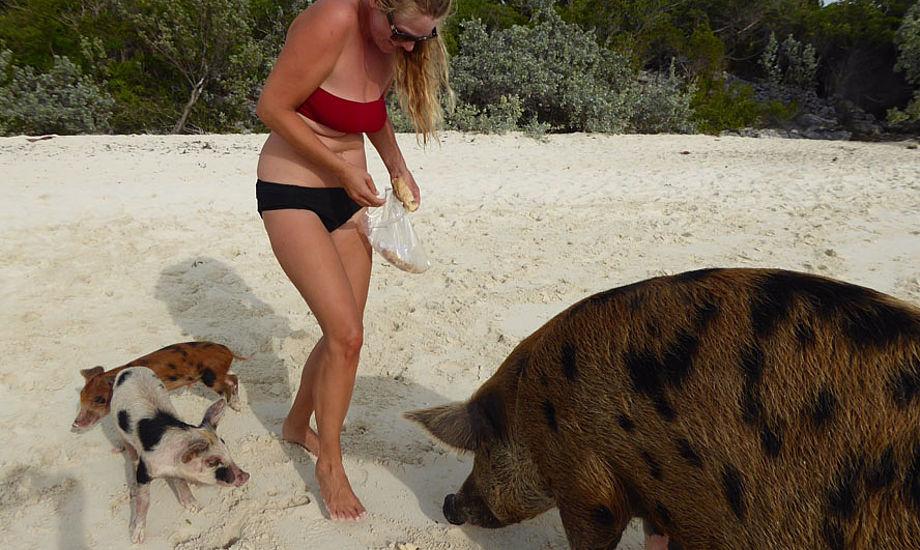 """Lige inden Mr. Big Pig begynder at """"jagte"""" mig rundt på stranden på Bahamas. Foto: Henrik Hansen"""