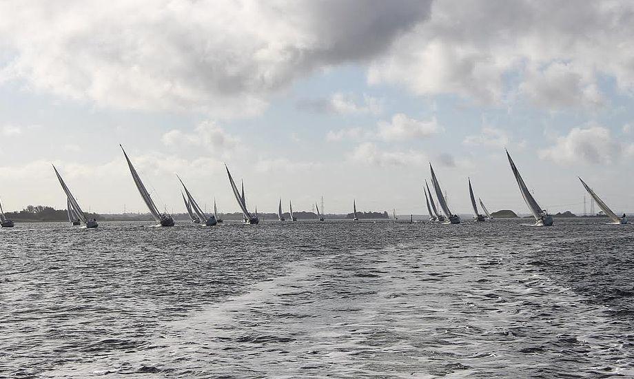 31 både deltog i den første Eleore Rundt i over 30 år. Foto: Bo Vestergaard