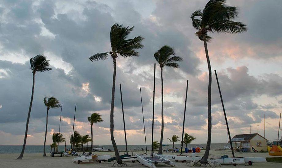 Palmer og strand. Vejret er ikke kun sol og sommer i Florida.