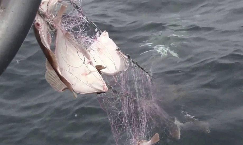 Ny undersøgelse skal skabe klarhed over mængderne af tabt fiskegrej i dansk farvand. Foto: YouTube