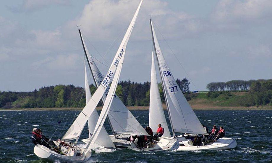 H-bådene får hele Løgstør Bredning at boltre sig på. Foto: Amtoft Lystbådelaug