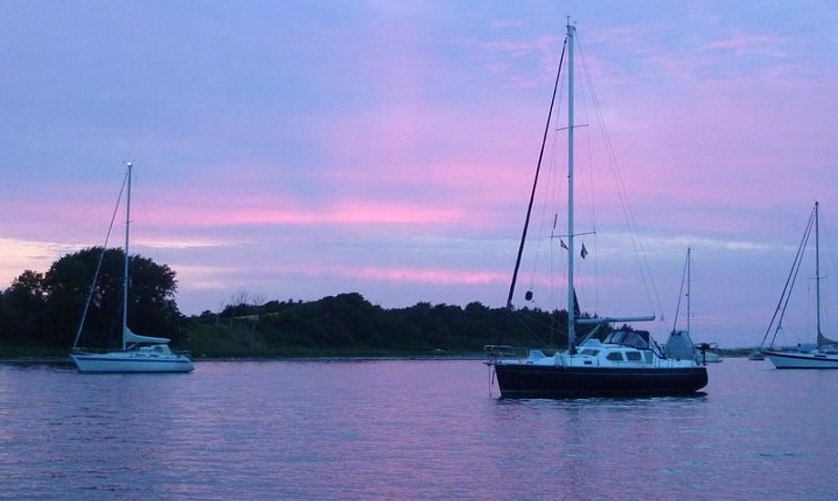 Sommeraften-idyl ved Avernakø. Der er plads til alle. Foto: Katrine Bertelsen