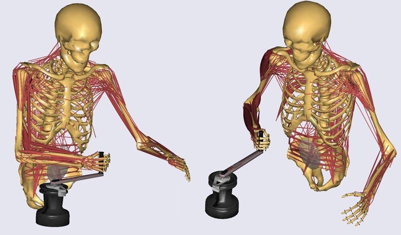 Computersimuleringen kan vise, hvilke muskler, der bliver overbelastede, og det er interessant viden, hvis man f.eks. vil sende konen i fitness. Grafik: Christian Gammelgaard Olesen